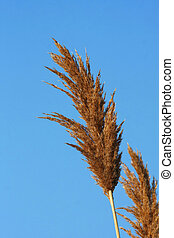 Marsh Grass