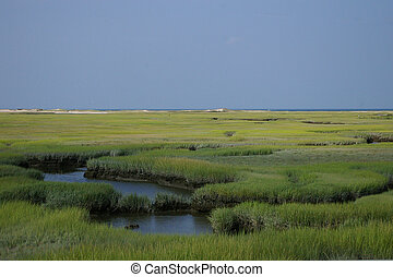 Marsh Grass In Coastal Wetland - Flat landscape of green...