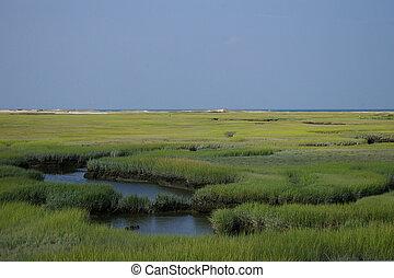 Marsh Grass In Coastal Wetland - Flat landscape of green...