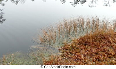 Small bog lake - Marsh grass near Small bog lake in national...