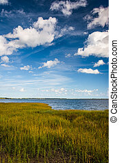 Marsh grasses at the Waterfront Park, in Charleston, South Carol