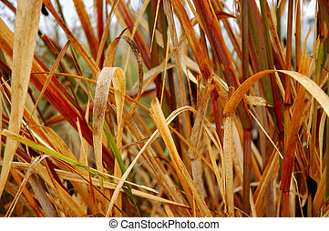 Close-up shot of dried marsh grass leaves