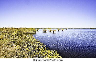Marsh in Savannah Georgia
