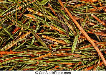 Marsh Northern Labrador Tea Ledum palustre . Hi res photo.