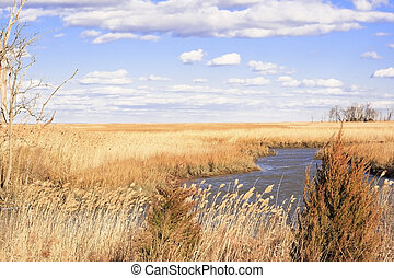 Marsh scene near Delaware Bay on a cold, winter day.