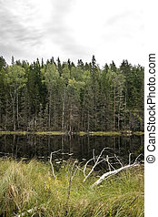 Marsh - Dead trees and other living things in a marsh near...