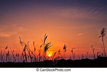 Marsh Sunset - Romney marsh sunset