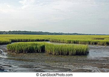 Marsh Tide - Marsh on Southeastern, US coast at low tide.