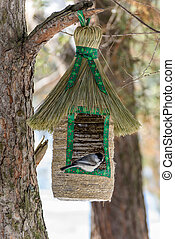 Marsh tit at the bird feeder