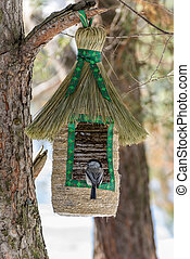 Marsh tit at the bird feeder