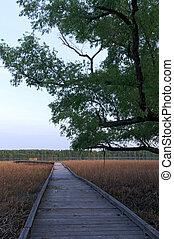 Marsh Trees and Boardwalk along Minnesota River