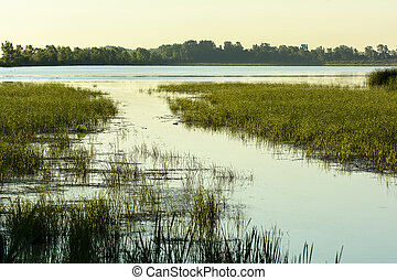 Marsh - Various aquatic plants thriving in a swampy marsh in...