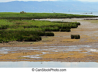 Marsh with brackish water and reeds at the water's edge