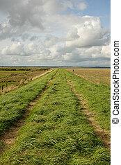 Marshland dyke. - Lush green grass and a track on a dyke ...