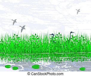 Marshland - Illustration of birds in a wetland habitat