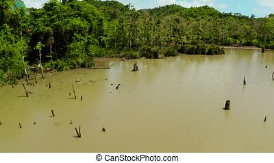 Marshland in the rainforest. Siargao,Philippines. -...