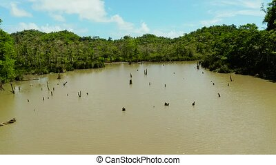 Marshland in the rainforest. Siargao,Philippines. - Pond and...