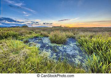 Marshland landscape at sunset in Onlanden Nature reserve waterlogging area Groningen, Netherlands