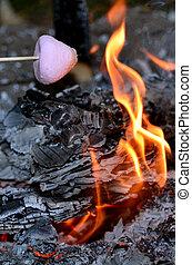 marshmallow, incendio campo, arrosto