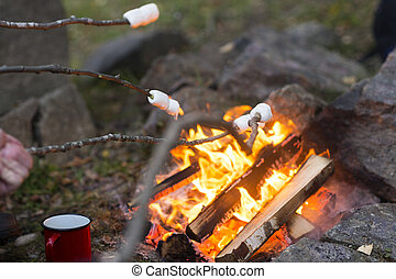 Marshmallows On Sticks Roasted Over Camping Fire