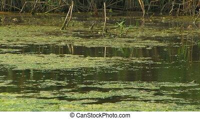 Marshy pond.