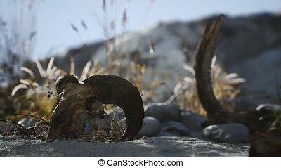 marteau, désert, mort, crâne