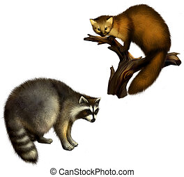 Marten and Raccoon. Isolated Illustration on white...