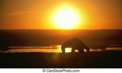 Martial arts capoeira, acrobatic hand-to-foot jump, setsun,...