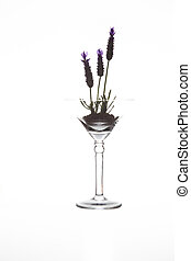 Martini glass with soil and lavender in it isolated on white background