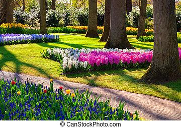 Marvellous flowers in the Keukenhof park.