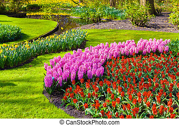 Marvellous flowers in the Keukenhof park. Beautiful outdoor...