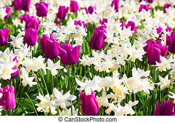 Marvellous flowers in the Keukenhof park