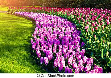 Marvellous flowers in the Keukenhof gardens. Beautiful...