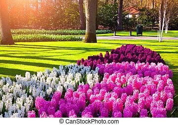 Marvellous flowers - Marvellous hyacinth flowers