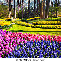 Marvellous hyacinth flowers in the gardens. Beautiful...