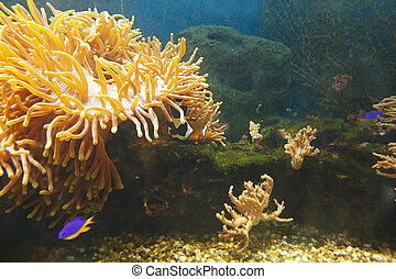 Marvellous underwater world of coral reef in tropical sea.