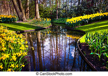 Marvellous yellow narcissus beautiful outdoor scenery in...