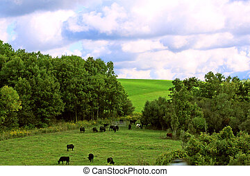 Maryland Farm Scene