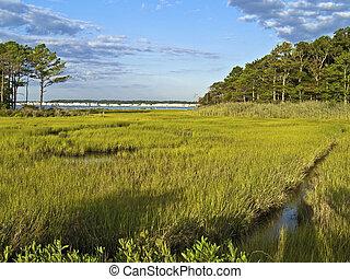 Maryland Wetland - A wide view of wetlands near Ocean City...