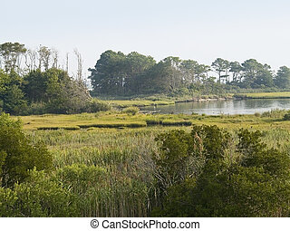 Maryland Wetlands - A wide angle view of the wetlands and...