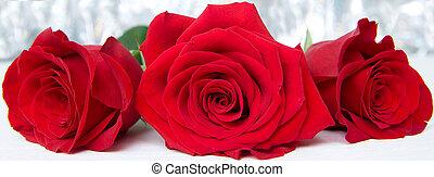 marzo, rosas, concept., valentines, -, tres, mujeres, fondo., madre, 8, boke, día, rojo