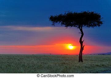 masai, coucher soleil, mara