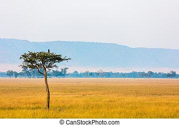 masai mara, v, východ slunce