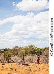 masai, savanne