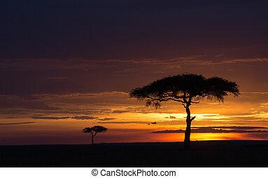masai, sonnenuntergang, mara