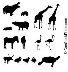 mascarado, animais