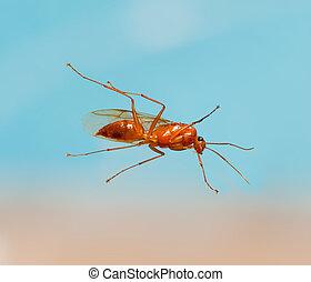 maschio, lavoratore, formica carpentiere, da, sotto