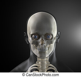 maschio, testa umana, raggi x, vista frontale