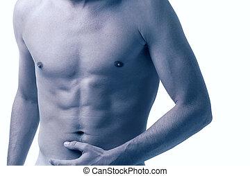maschio, torso
