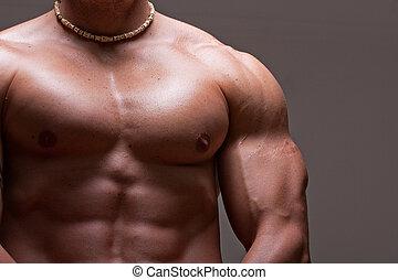 maschio, torso, muscolare